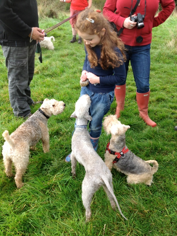 Heidi is very popular with our four legged friends!