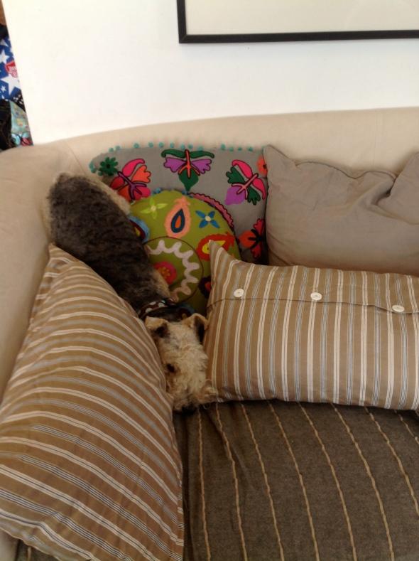 Coco's preferred position