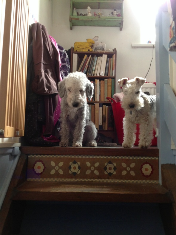 Beanie contemplating going down stairs under Coco's watchful eye