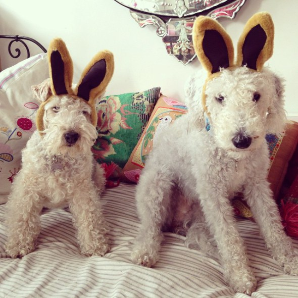 easter-bunnies